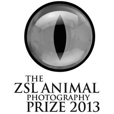 2013 ZSL ANIMAL PHOTOGRAPHY